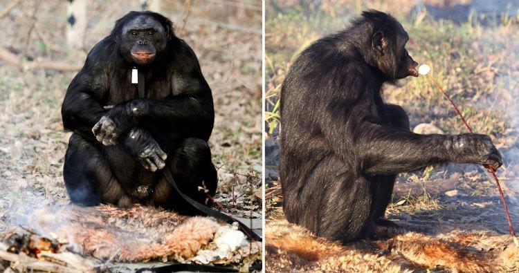 monkey cook food