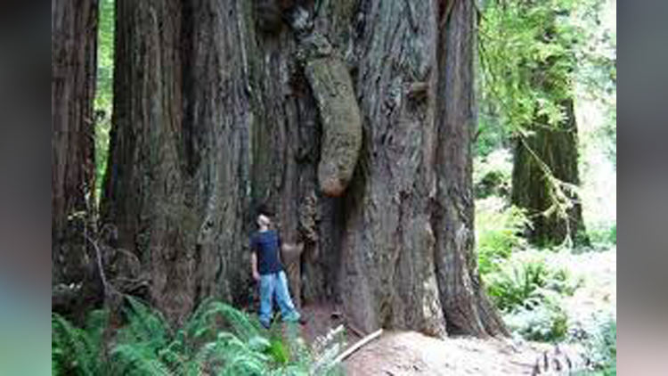 most weird tree in the world