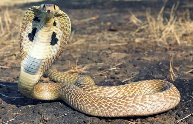 Wishful serpent is in panic because of people of this village
