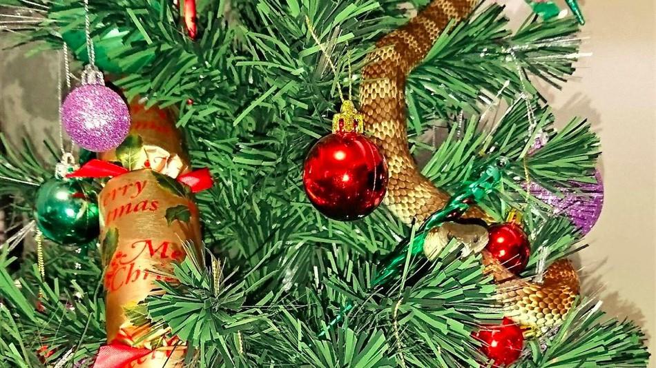 snake found on christmas tree