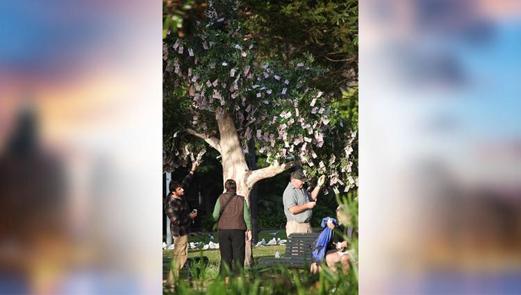 money grows on trees in australia