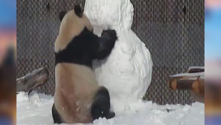 panda vs snowman video