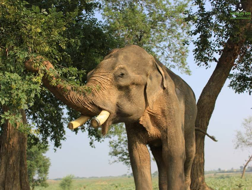 Any elephant can become miserable