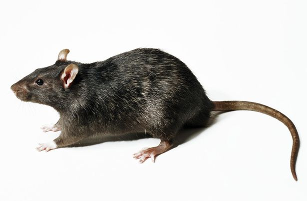 everybody gets scared when rat comes out of the bathroom