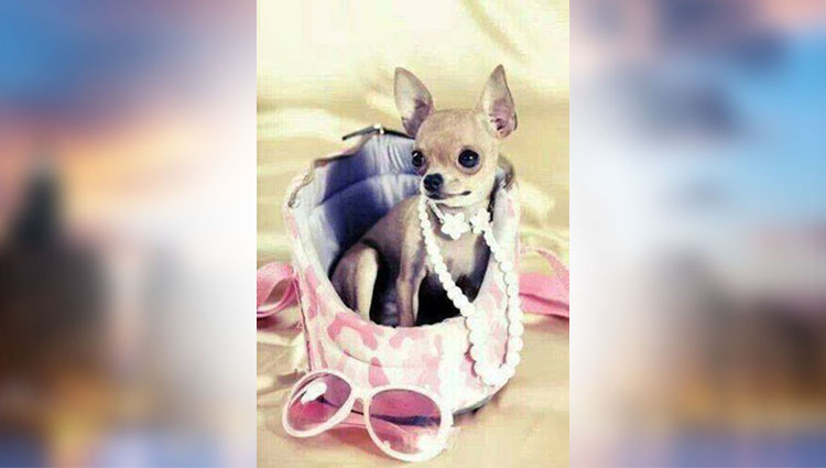 when dog have dressed as girl