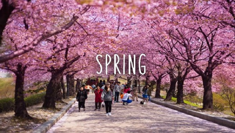 spring season pictures of japan
