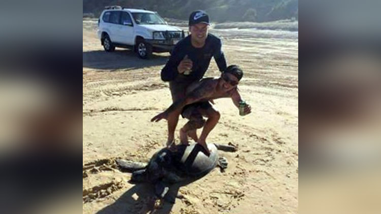 turtle surfers could be fined 20k each