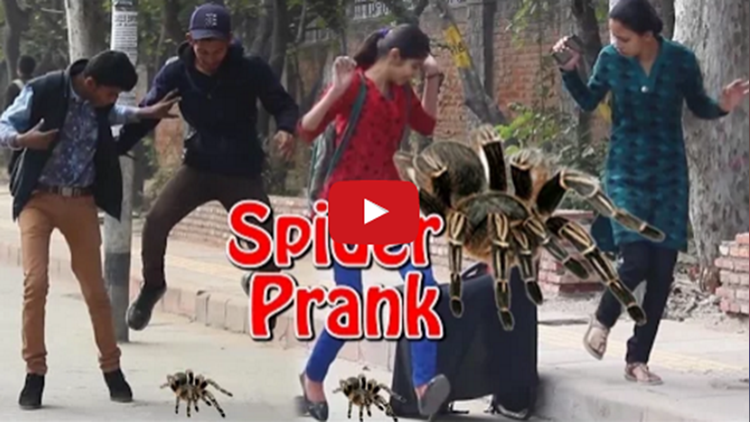 Giant Spider Prank video