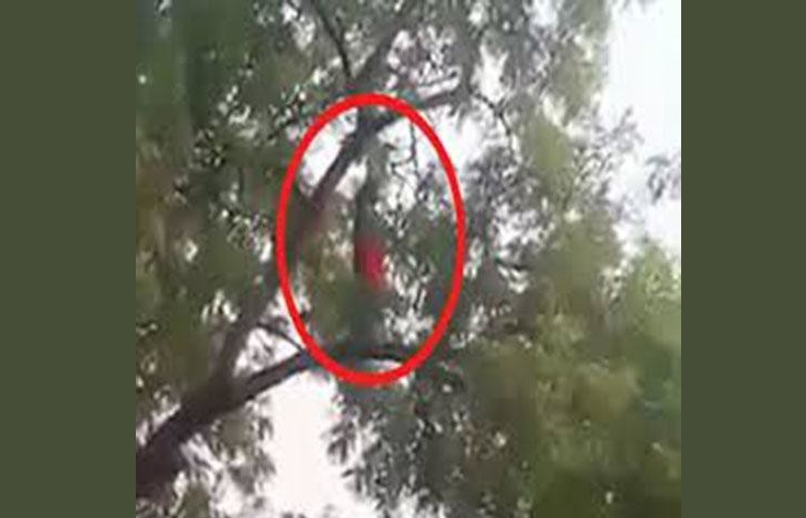 Woman offering Namaz on Tree