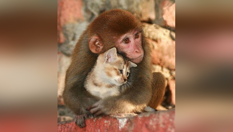 beautiful animal couple pictures