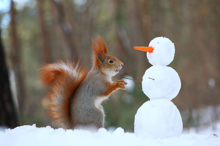 sweet squirrels captured in camera