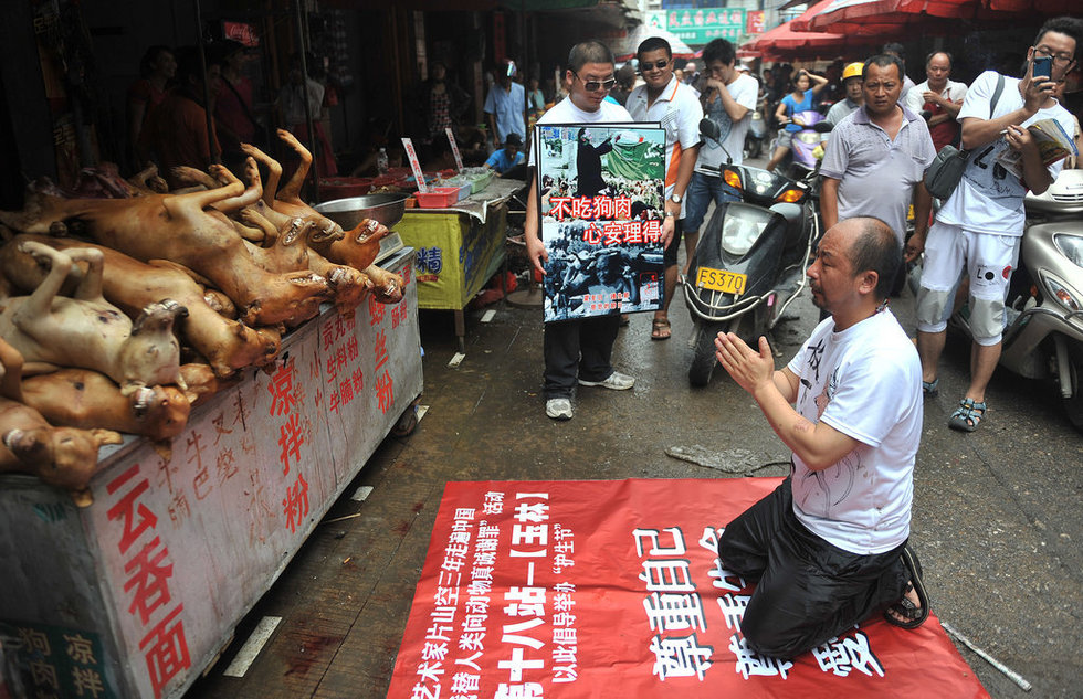 This is on account of the dog meat