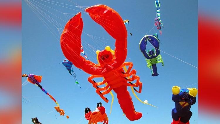 type of kites on this makar sankranti