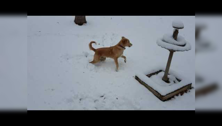 Dog from Puerto Rico sees snow for the first time