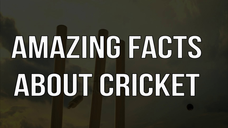 unknown facts about cricket