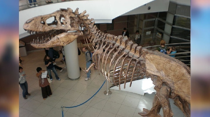 France dinosaur skeleton sold for 9 crore rupees