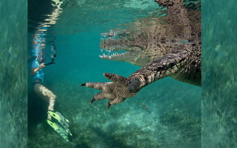 photographer stephen frink click a crocodile pictures