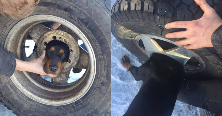 Puppy Gets His Head Stuck In A Tire