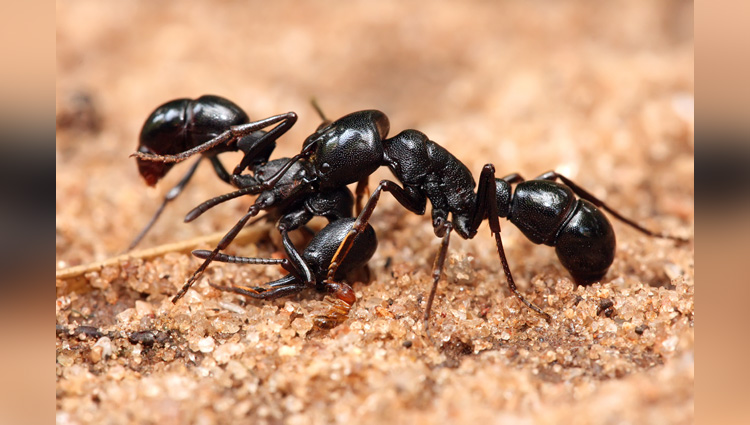 ants make toilets in their nests