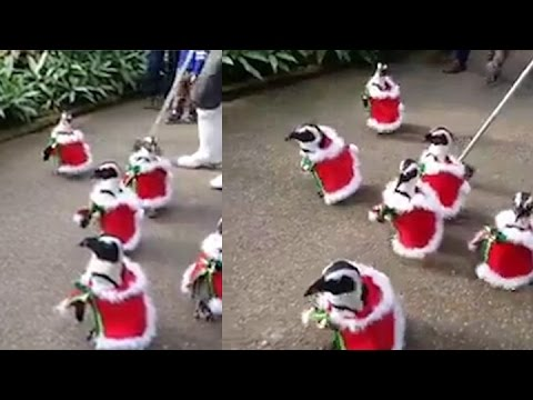 a parade of penguins dressed up as santa claus