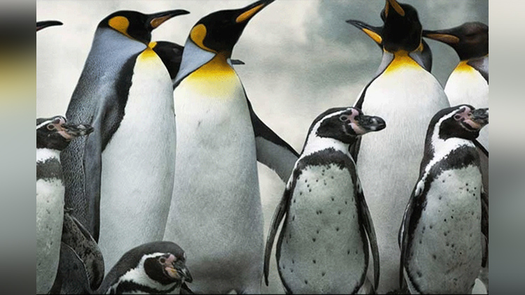 Penguin Dies At Mumbai Zoo by low temperature