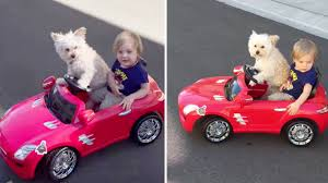 Dog drives a little car
