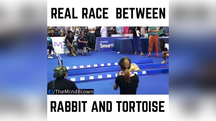 When Story Turns Into Reality: See Who Wins The Race Between Tortoise And Rabbit