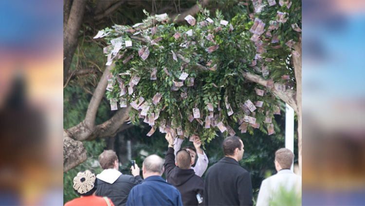 money grows on trees in australia