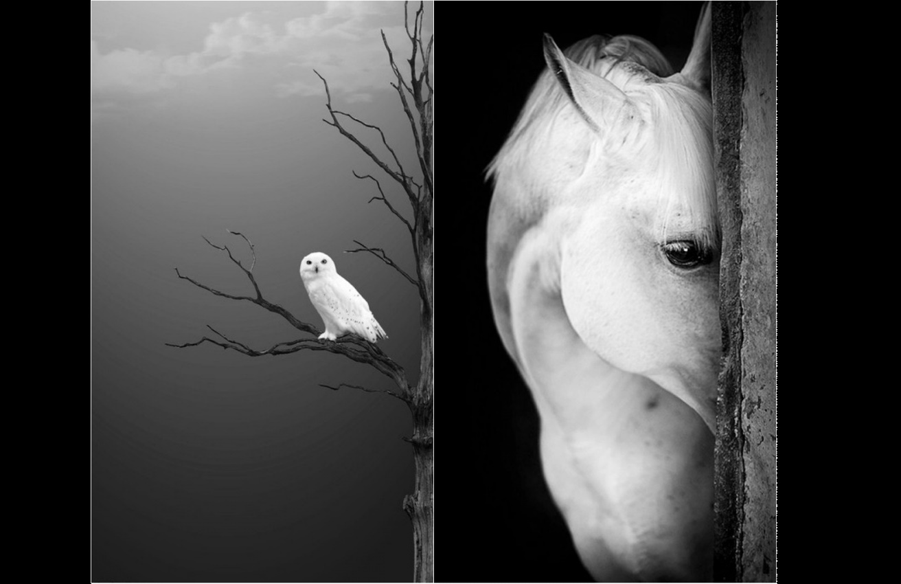 photography black and white