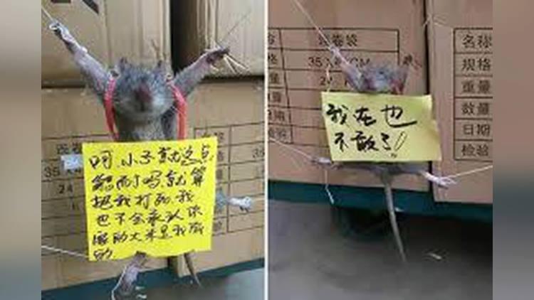 burglar rat punished by a shopkeeper