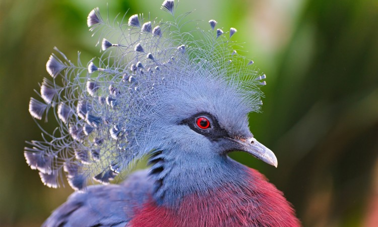 worlds most beautiful birds pictures
