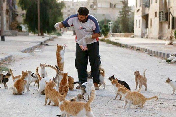 this man taking care of more than 100 cats in syria
