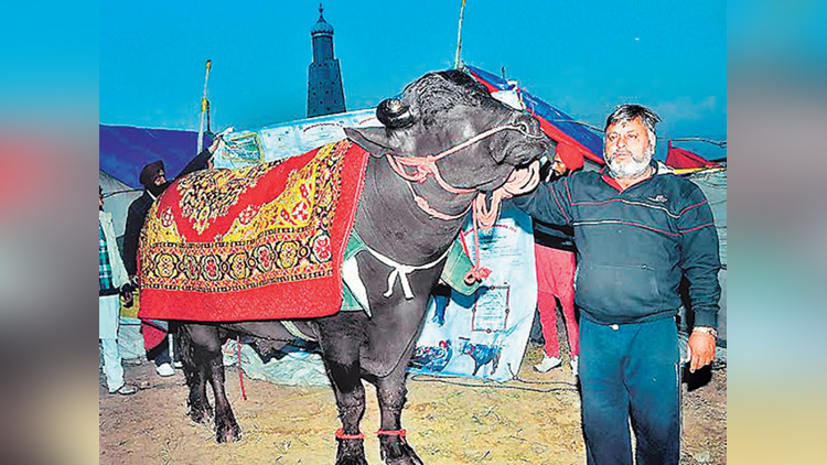 buffalo value is more than 9 crore rupees
