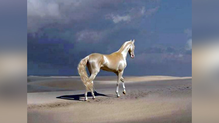 most beautiful horse in the world akhal teke