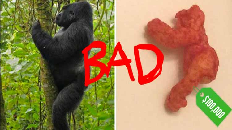 WTF?? Harambe Looking Cheetos Sold for $1,00,000 and We are not Going to Eat Them Ever Again...