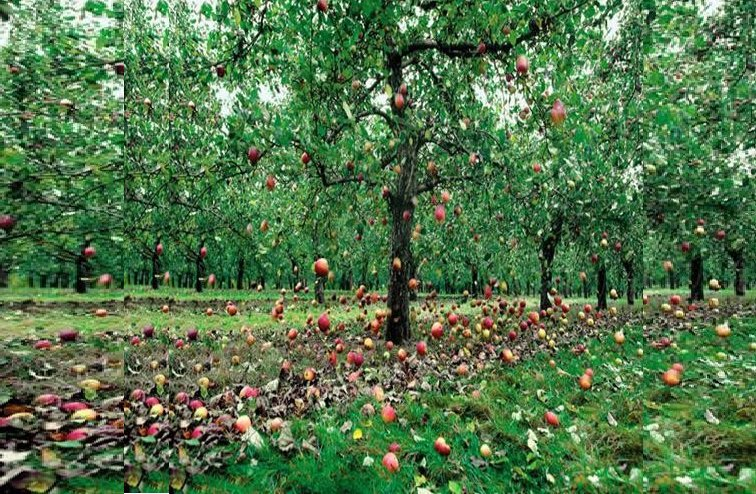 apple rain in england