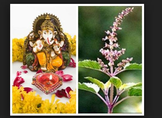 Why tulsi is not offered to lord ganesh