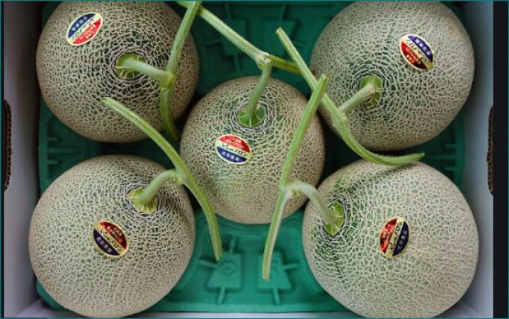 world most expensive fruit Japanese Melons