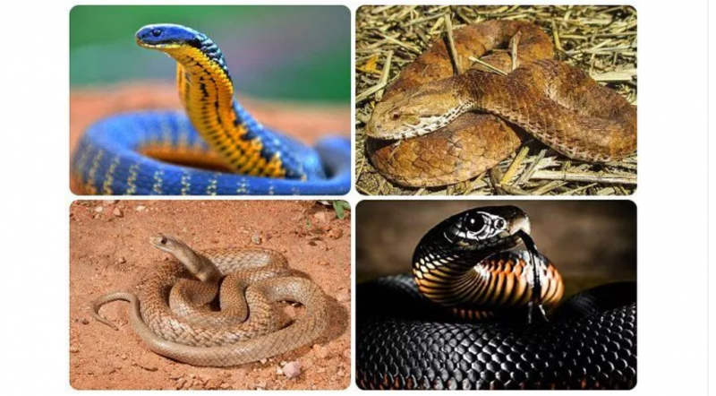 5 of the World Deadliest Snakes