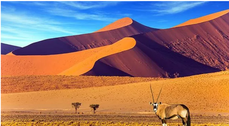 interesting facts about namib desert