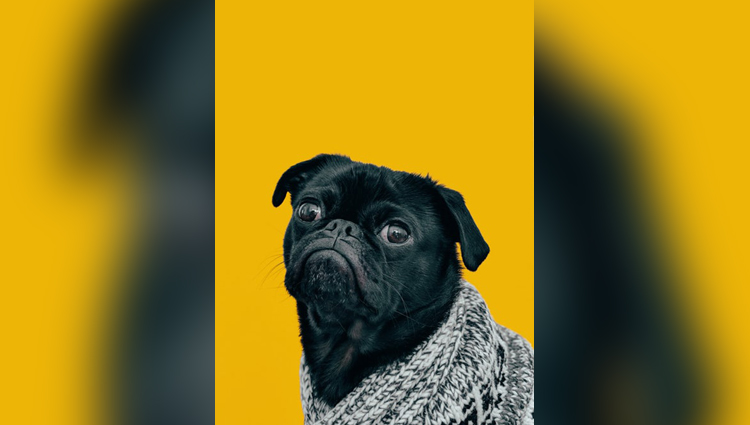 funny photos of animal