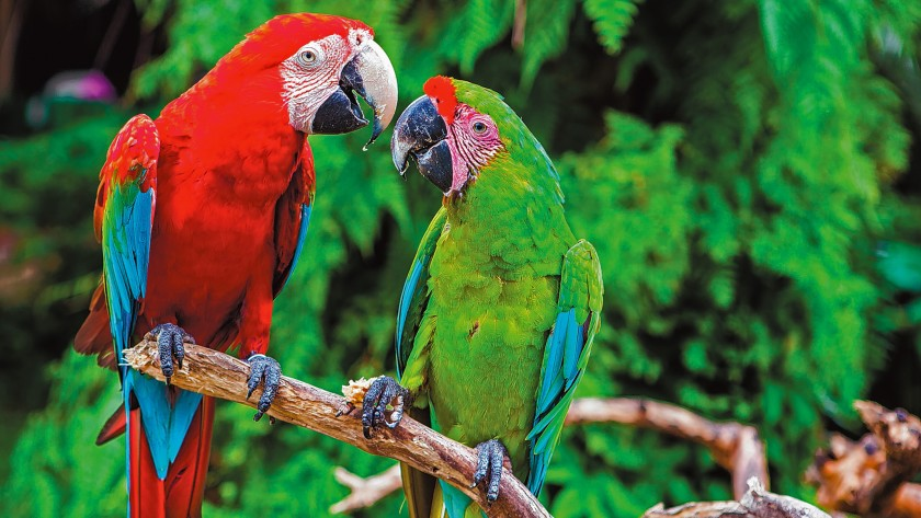 Scientists discover bones of 190 million year old parrot