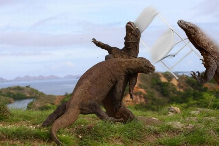 photo of komodo dragons gives way to hilarious photoshops