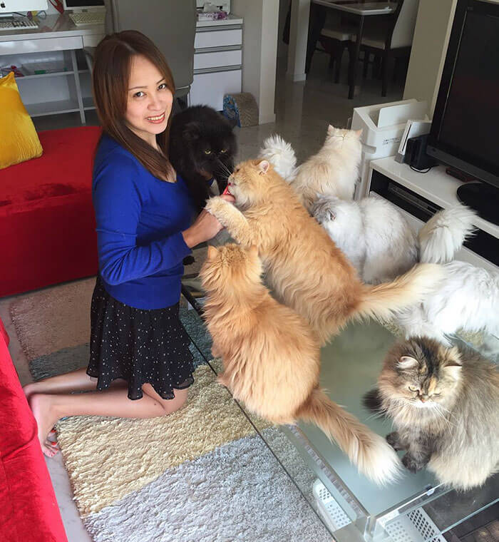 12 Cats Lady pictures viral on social media