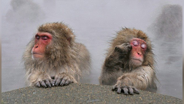 photographer click funny mouth of monkeys