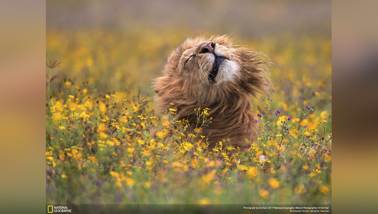 national geographic nature photographer of the year 2017 winners