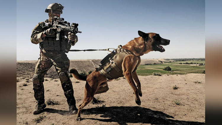 Why Does The Army Kill Their Trained Dogs Post Retirement