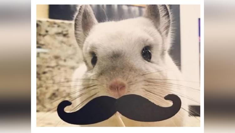 Photogenic Rabbit Gives Poses For Social Media