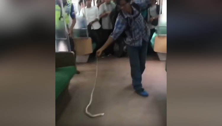 Snake on A Train in Jakarta Indonesia