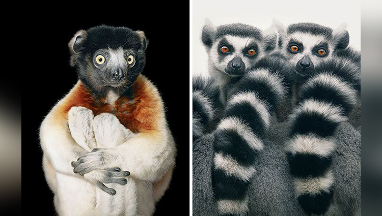 This photographer clicks the pictures of extinct animals
